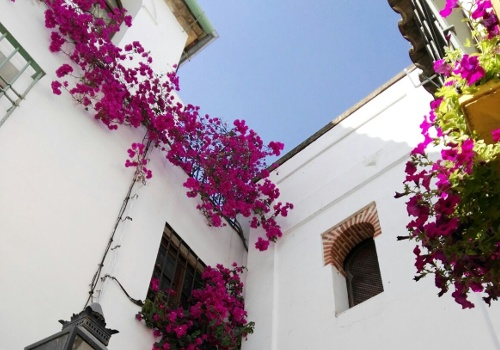tejados de Córdoba